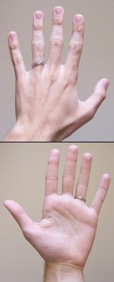 A human hand typically has four fingers and a thumb; 15kb