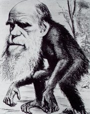 Caricature of Darwin as an ape in the Hornet magazine